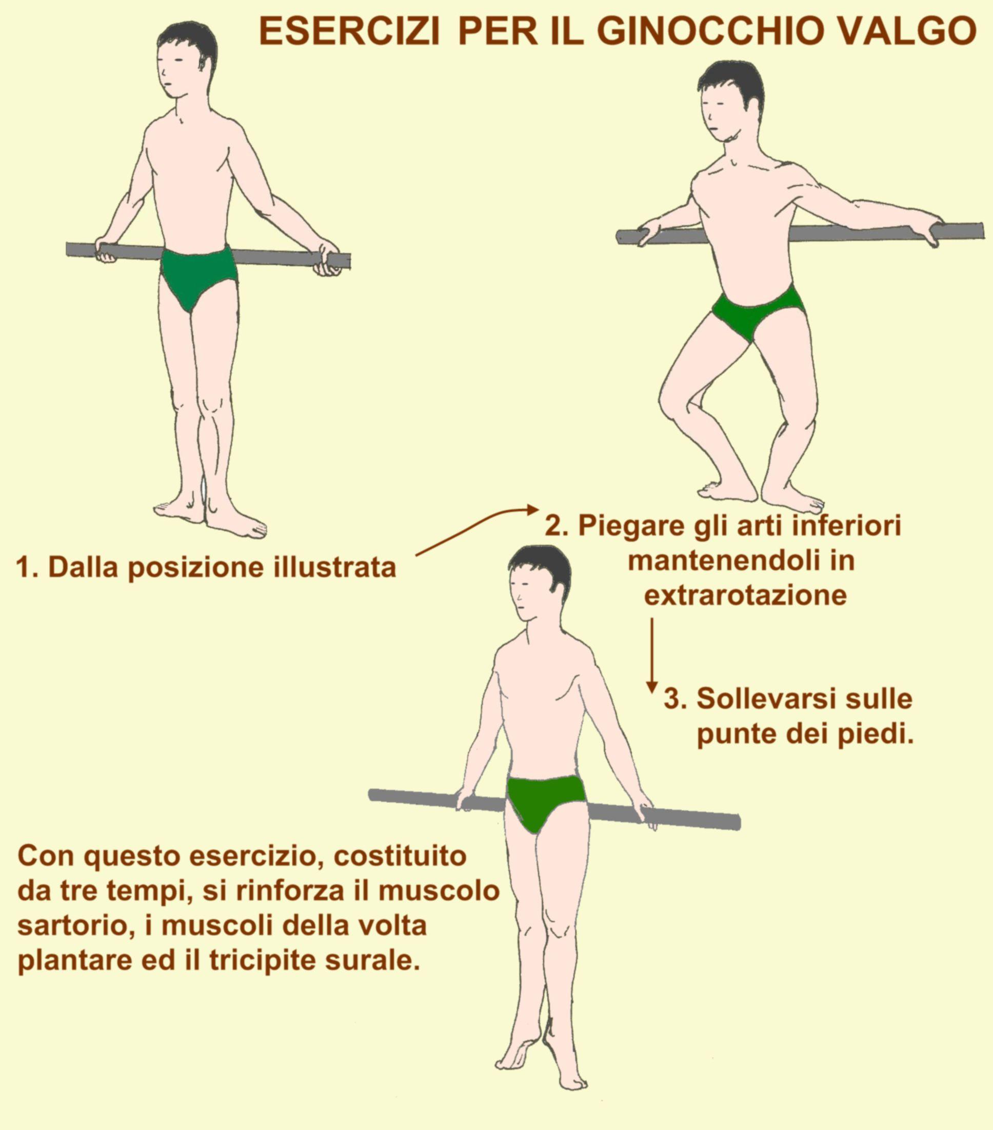 Ossa Muscoli Articolazioni Dizionario Medico Gruppi Muscolari